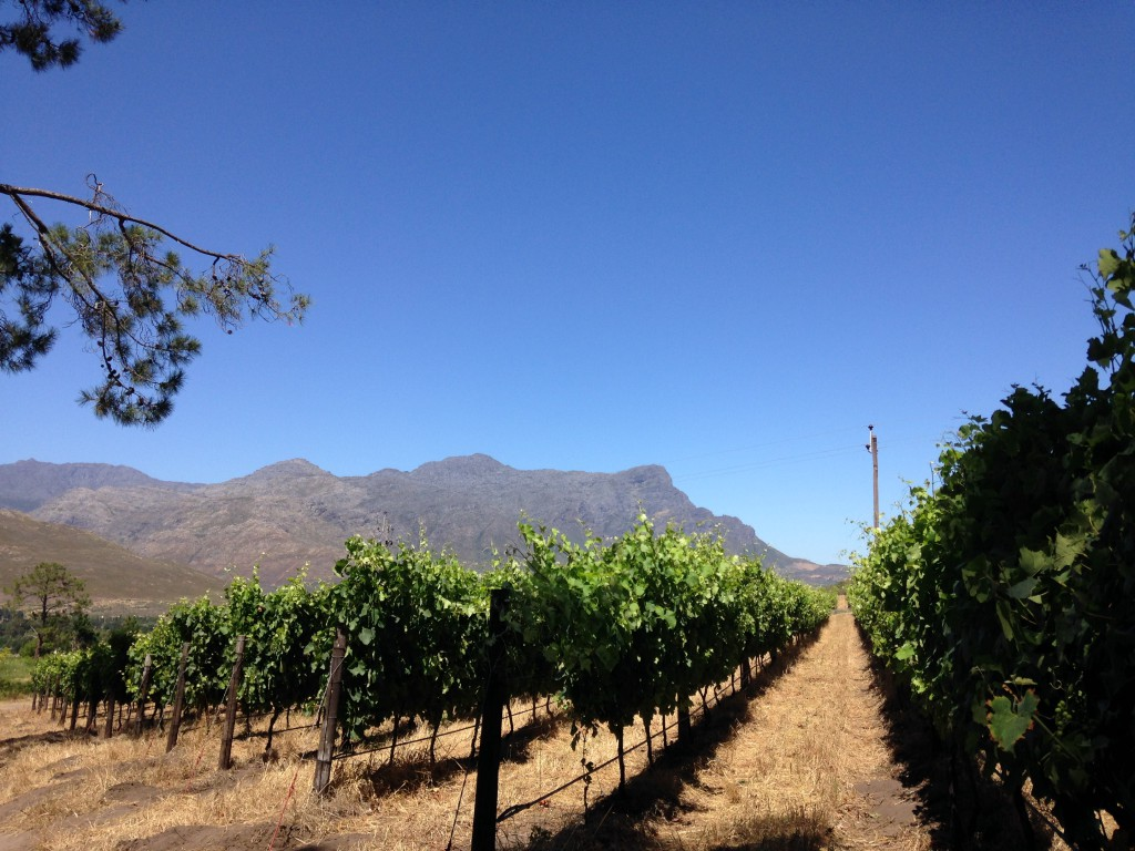 Franschhoek vineyards South Africa wine