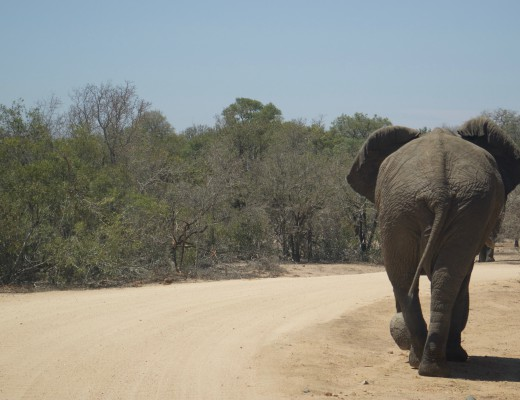 Kruger National Park, Big Five, Sabi Sands, Game Drive, Safari, Africa, Wildlife