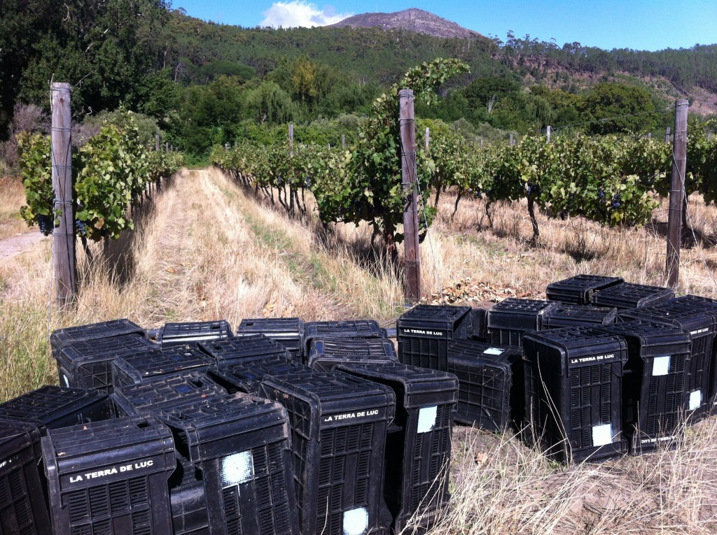 Harvest time in the Cape!