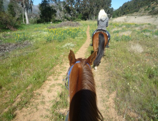 Wine tasting on a horseback and horse riding trails, Paradise Cottages & Stables, Franschhoek South Africa Cape Winelands