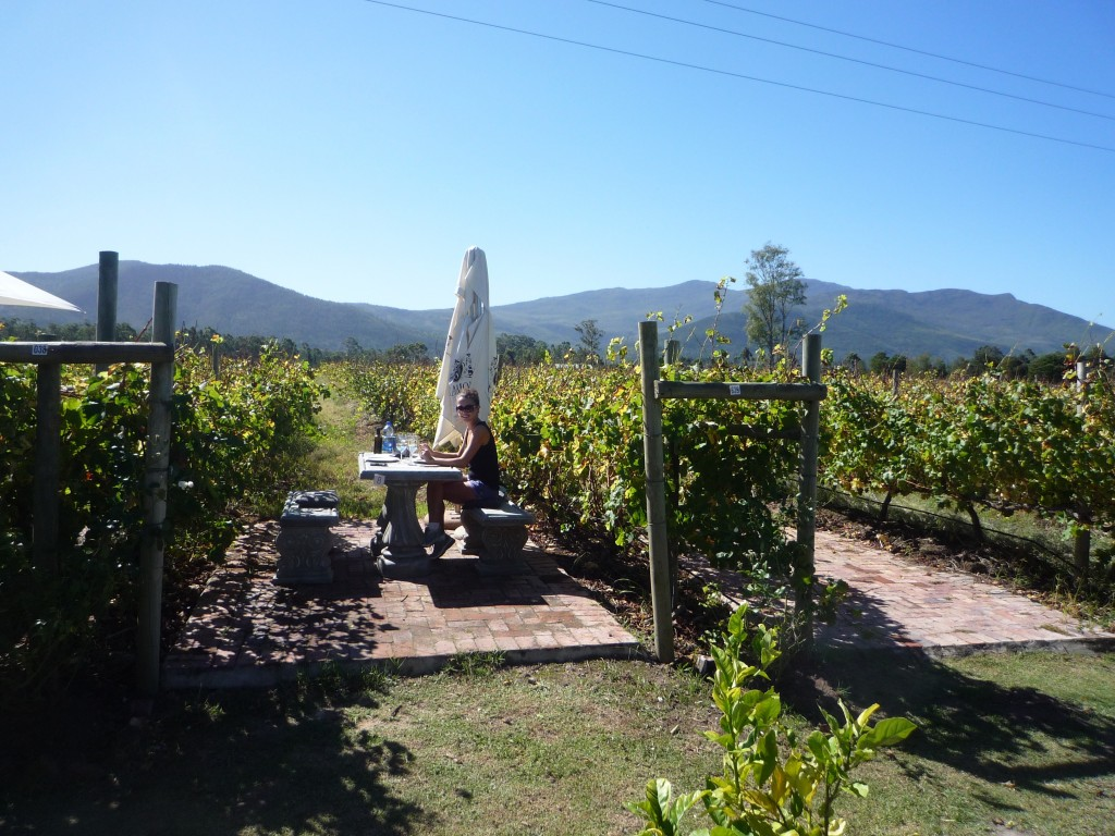 Bramon Winery, Plettenberg Bay, Picnic in the vines, vineyards, Sunday, Family